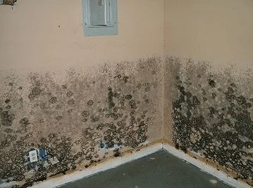 Mold Damage from Flood